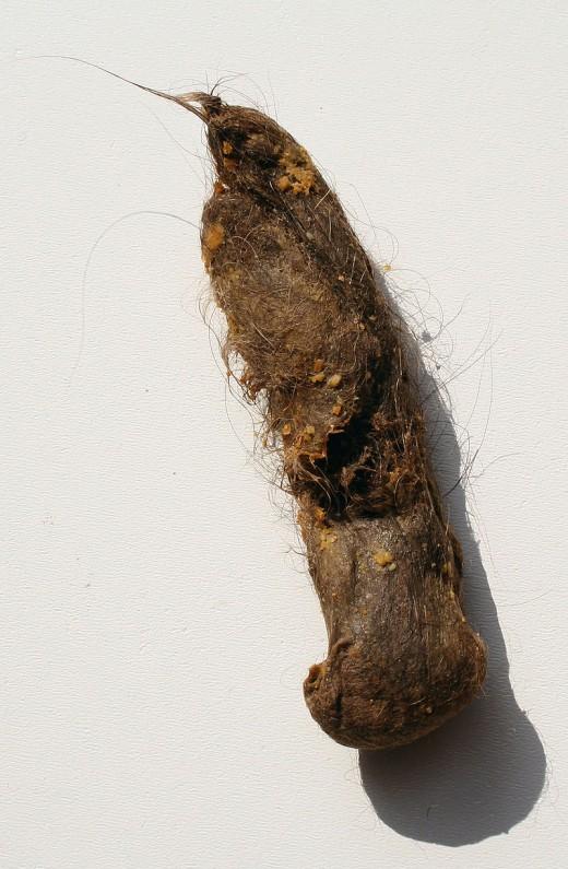 Cat Hairball 10 cm long