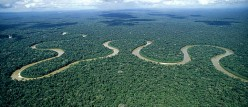 Why the Amazon rain forest should be protected?