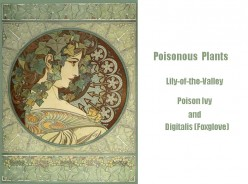 Poisonous Plants: Lily of the Valley, Poison Ivy and Foxglove (Digitalis)