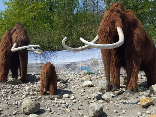 Wooly Mammoth in Aalborg Zoo Ice Age By Honymand  CC BY-SA 4.0