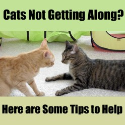 Cats Not Getting Along? Some Tips to Help