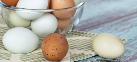 Egg Recipes and Info