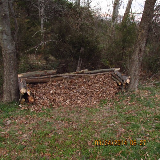 In the beginning I constructed the frame of my compost heap out of logs and branches from dead tree limbs and added a bed of leaves.