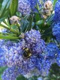 Backyard Apiaries and Beekeeping