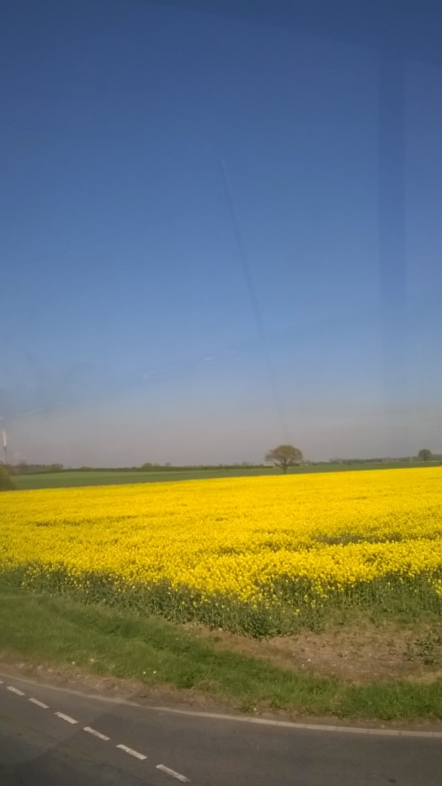 In May the fields are fresh with oilseed rape