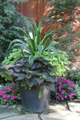 """Unleash your creativity with easy container gardens using the popular concept of the """"thriller, filler, and spiller"""" combo."""