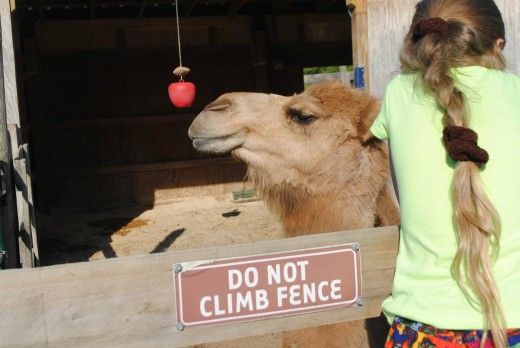 They even have Camel Rides.