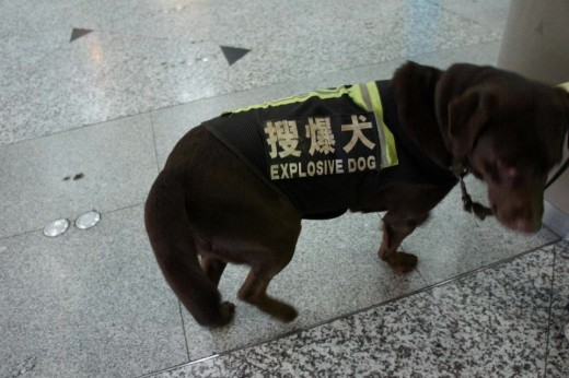 Proper Translation makes a difference. Correct translation: Explosive Detection Dog