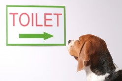 Potty Training Your Dog The Right Way