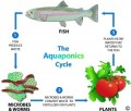 How to Survive Climate Change and Monoculture with Aquaponics