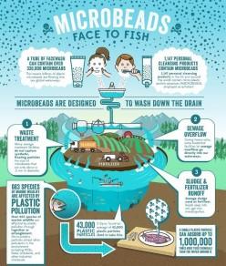 Toxic Plastic Fish...Yum!!!