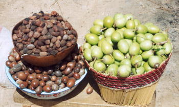 This Shea butter fruit itself is the same size as a chestnut.