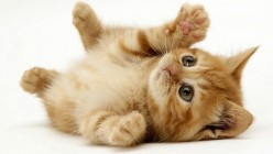 10 Quick Tips About Kittens