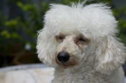 The Heartbreak of Losing Your Pet: Is It Worth It?