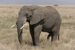 Five Amazingly Large Prehistoric Proboscideans