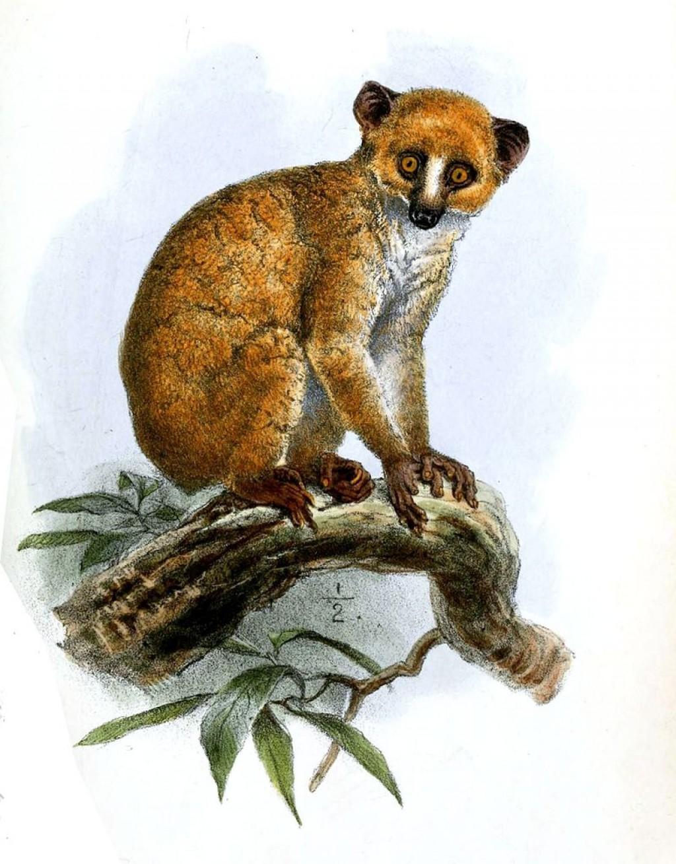 the unusual lemurs hubpages