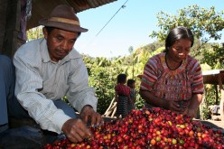Globalization: Guatemalan Coffee Farmers