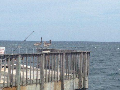 "Two pelicans ""chilling"" on the Pompano Municipal Pier"