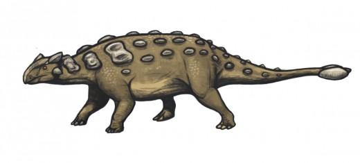 Ankylosaurus Dinosaur Reconstruction By Mariana Ruiz Villarreal Public Domain