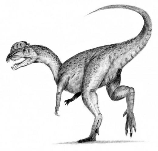 Dilophosaurus Dinosaur Reconstruction By Arthurbleastag CC BY-SA 2.5