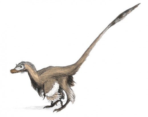 Velociraptor Dinosaur Reconstruction By Ryan 3720 Public Domain