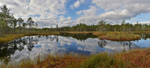 Bog lake in Suru Bog, Põhja-Kõrvemaa Nature Reserve, Estonia