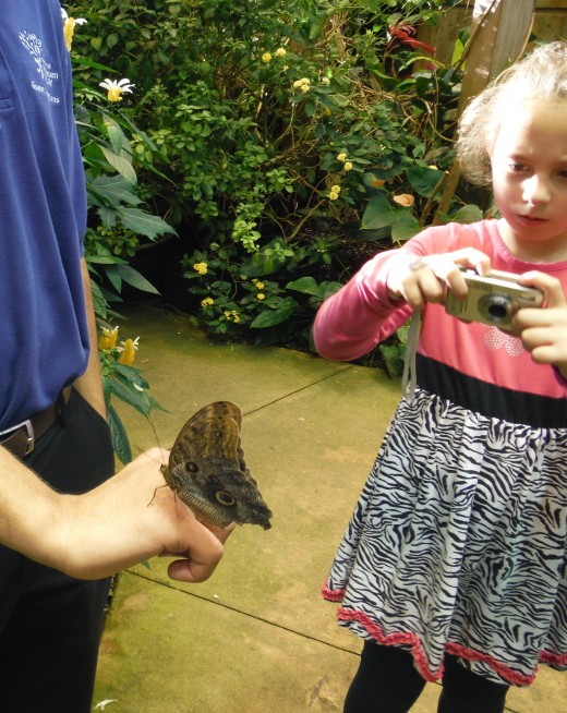 While these butterfly domes and rooms are engaging and they are able to land on your finger or sometimes on your face, which tickles, but touching is not allowed and can be harmful to the butterfly.