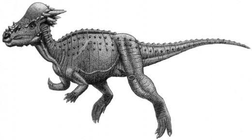 Pachycephalosaurus  Dinosaur By tbe Public Domain