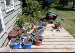 Minnesota Home Improvement: Patio or Veranda Gardens