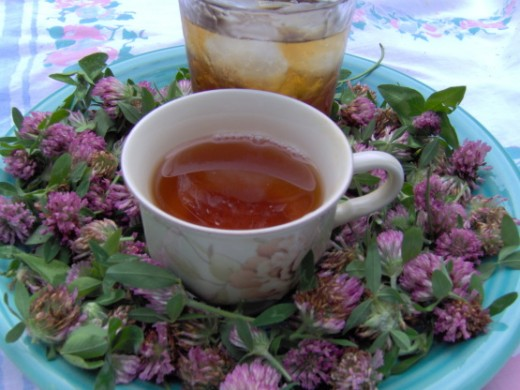 Red clover tea!