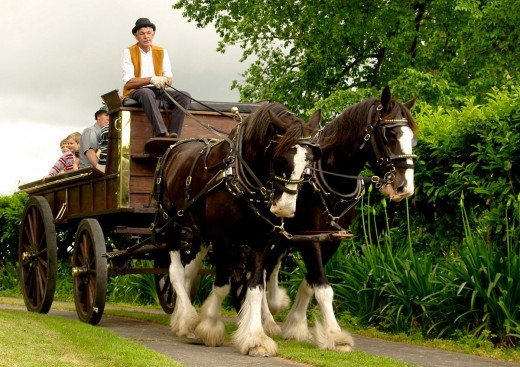 Two New Zealand Clydesdales pulling a wagon By Jude CC BY-SA 2.0