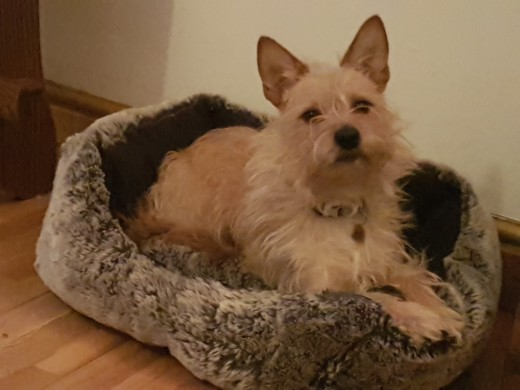 Don't be fooled by this expression, he is more than comfortable in his new bed!