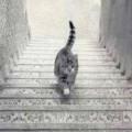 Does cat climb or descend?