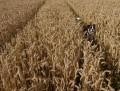 America's Reliance on Corn