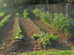 This what my garden looks like now, as I have procrastinated on publishing this article.