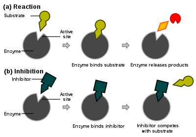 Enzymes and substrates at work