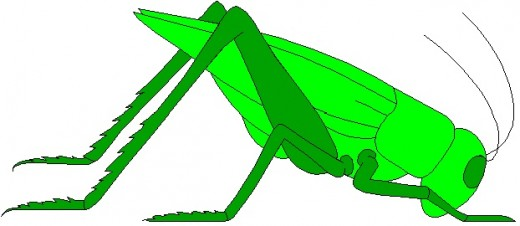My pet grasshopper: Dennis Hopper