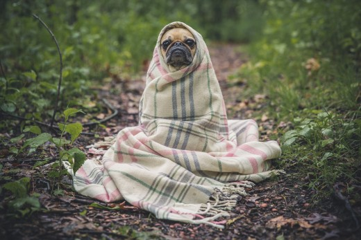 "Jedi Pug ""May the Force Be With You"" 