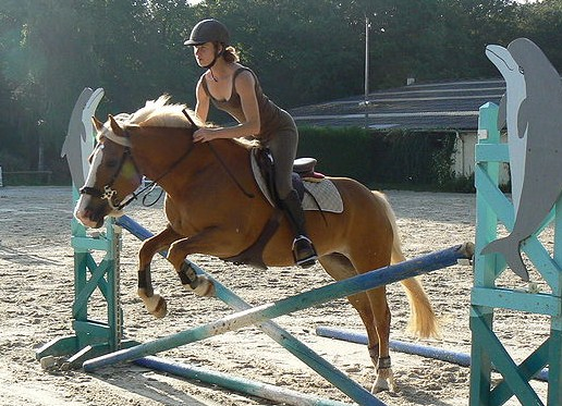 Haflinger horse jumping by jennifer gauthier CC BY-SA 3.0