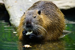(Almost) All About Beavers
