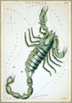 Astrology Sun Signs: Scorpio the Mysterious