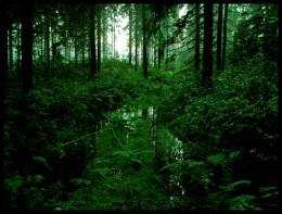 Rainforest by noraki