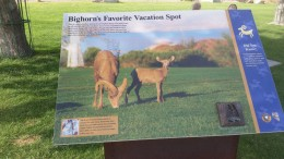 An interesting sign with information about the desert bighorn sheep.