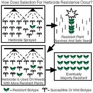 Weeds resist herbicides