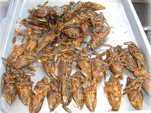 Deep fried giant water bugs