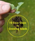 10 Easy Steps to Growing Seeds - Gardening For Beginners