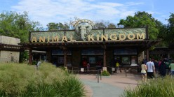 Animal Kingdom Vacation Tips