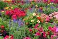 Small Gardens: Choose Perennials!