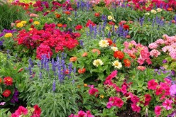 Small Gardens: Choose Perennials!