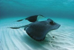 Deadly Sea creatures that live in beach waters
